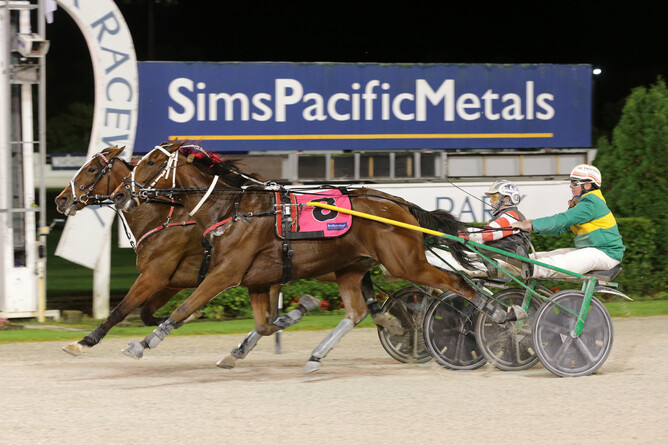 Lemond (closest to camera) gets his nose in front of Massive Metro to win at Alexandra Park on Friday night. - Trish Dunell