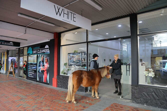 Caramello called into CR sponsor White Salon for a birthday do - Photo: Picket Fence