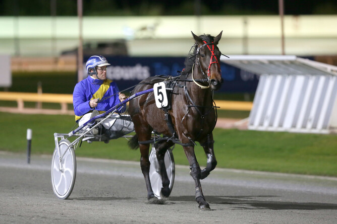 Westburn Yield will have her first start for Arna Donnelly at Manawatu on Tuesday  - Trish Dunell